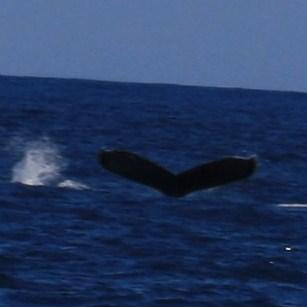 Taken During Whale Watching Tour ©DelightfullyDifferentLife