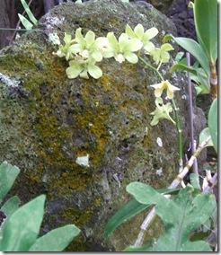 Orchids - Copy