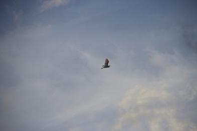 Carefree as a Bird.