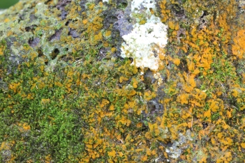 Rock moss textures. Photographed up close with macro lenses.