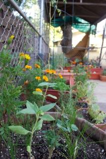 Scent of marigold, garlic chives, tomato plant, etc.