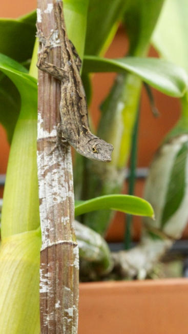 Lines of orchid plant and pattern on gecko.