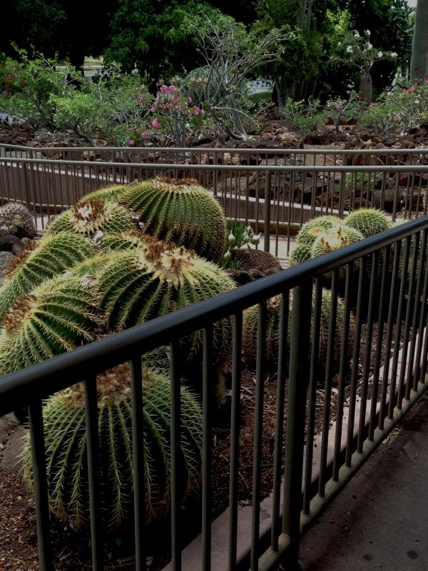 Zigzagging Through Cactus Garden